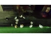 有窗戶打開!討罐貓團聽到聲響 1秒群聚狂喵「餓了~」