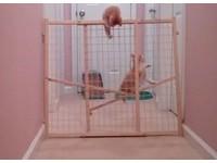 最可愛越獄!2隻調皮小貓輕鬆翻越圍欄