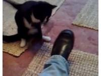 乳牛貓使出「北斗百裂拳」 1.5秒內連擊黑鞋7掌