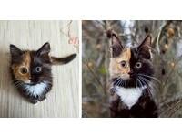神在創造這隻貓時…呃那個黑筆沒水了? 雙色臉小貓網爆紅