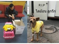 寵物狗仁川機場被射殺!首爾飛曼谷 運輸籠鬆脫闖跑道