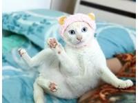 第1次戴羊羊頭套! 萌貓嚇到睜大藍眼「舉腳定格3秒」