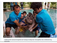 小象踩陷阱腳受傷...水療怕怕逃治療 志工耐心安撫