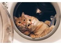 喵星人入侵!洗衣機當太空艙 牠們還會追劇、滑手機!