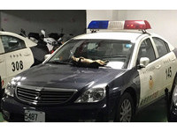 虎斑貓大字躺新北警車 車牌「5487」意外成亮點