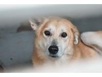 申請這張「寵物認證卡」 狗狗、貓咪可免費打疫苗!