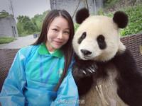 「網美熊貓」自拍會找角度! 網:人類躲在裡面吧...