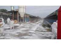 半個月6例禽流感 雲林撲殺近1萬6000隻紅羽土雞