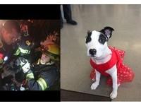 消防員衝火場從死神手中搶回毛孩 3個月後重逢好溫馨