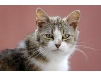 貓咪老愛跟我進廁所? 都是因為愛...不想被你「排擠」