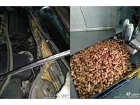 老鼠偷花生塞爆引擎蓋 車主清空遭網怨「不讓牠過年」