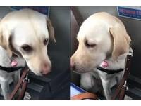 賺到了!公車運將「拉嗓門」...介紹導盲犬40分鐘 網讚爆