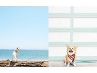 大世界裡的小狗狗 讓人心情海闊天空的極簡狗兒IG