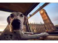 世界第一輛狗觀光巴士發車! 繞行倫敦鏟屎官最棒路線