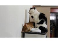 躺飲水機爽取暖.. 黑白貓「盯場2小時」可以換我了嗎