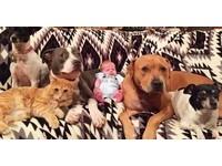 「小寶貝」新生 4個毛姊姊、1個毛哥哥搶照顧