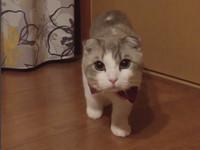 ▲貓咪躲窗簾慢動作露出半邊臉。(圖/翻攝ohshima_moa IG)