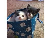 暴雪吹來兩小貓 喵星人侵門踏戶:我這麼萌,收編吧!