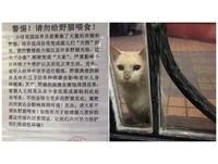 寒流強襲!社區貼狠心公告「貓咪有細菌不得餵食」