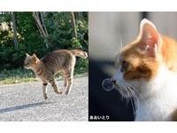 拍到貓皇的鼻涕泡泡了!日攝影師專捕捉貓咪的漏網鏡頭