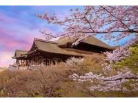 花見綺麗京都 姬路城櫻吹雪 四季酒店品味春之風情