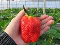 冬天94要吃草莓!清洗千萬別用手搓...專家教你保存撇步