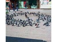 遭「3圈鴿群」包圍好腿軟 小黑狗:那誰..快來救救我!