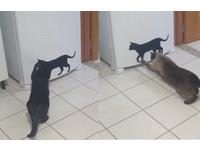 這貓不會動!主子們伸手測呼吸 原來是冰箱的「貼紙」