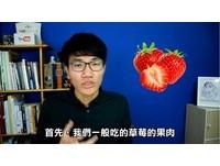 草莓是假果西瓜才是莓果類 他分析讓網哭「能吃就好」