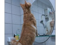 橘貓站臉盆自信抬下巴:魔鏡啊魔鏡~我是不是最帥的喵