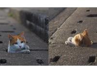 要玩打地喵嗎?攝影師捕捉愛鑽下水道的貓咪們
