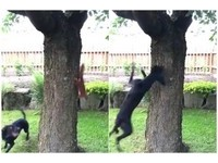 松鼠樹上快速飄移~倒立也可以!傻汪追不到撞樹想哭