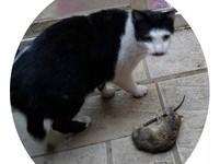 天冷幫忙安置暖電毯... 隔天貓咪送他「一隻老鼠」