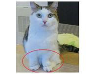 地板冷吱吱..萌貓短手疊後腳 「朕高貴的手絕對不碰地」
