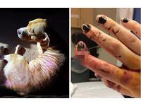 比特犬抓狂撲咬20歲老貓 她為了搶救手指遭咬斷見骨