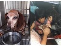 被棄養15歲臘腸狗到新家過年 躺在小朋友懷中「笑了」