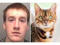 變態殺貓 英國18歲男偷10貓 供狗狗獵噬取樂