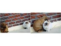 為了取暖...流浪貓狗慢慢靠近彼此 畫面暖到讓人心疼