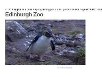 不滿貓熊太受歡迎 企鵝向遊客丟大便