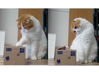你到底是誰!主子猛按存錢筒 90度歪頭看「小偷貓」