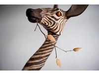 木雕藝術家陳凱智回顧展 「指鹿為馬」寫實動物超吸睛!