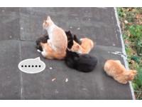 好冷想取暖>< 浪浪直接坐同伴身上 橘貓:我被鬼壓床了...
