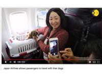 日航允許毛小孩進客艙!日本首架寵物包機啟航