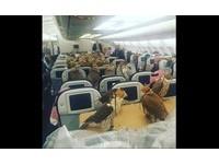80獵鷹有專屬護照!沙國王子帶牠們搭飛機 出遊打獵囉