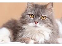 貓有5種人格特質 你家主子是不是最難搞的那一類?