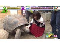 正妹女主播甜笑摸龜頭:牠在膨脹❤ 網驚:好熟練的手法!