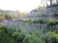 和13年的紫色回憶說再見!薰衣草森林尖石店5月熄燈