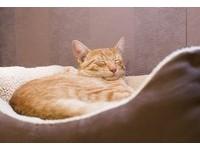 給我罐罐啦! 貓主子睡覺又說夢話了?...不要吵牠喔