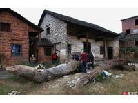 湖南村民從河中挖出2棵大楠木 直言:少於十萬,不賣