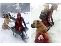 放牧母羊突然生產 11歲女孩與愛犬頂風雪「書包揹回」